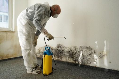 Mold Remediation Lakewood CO